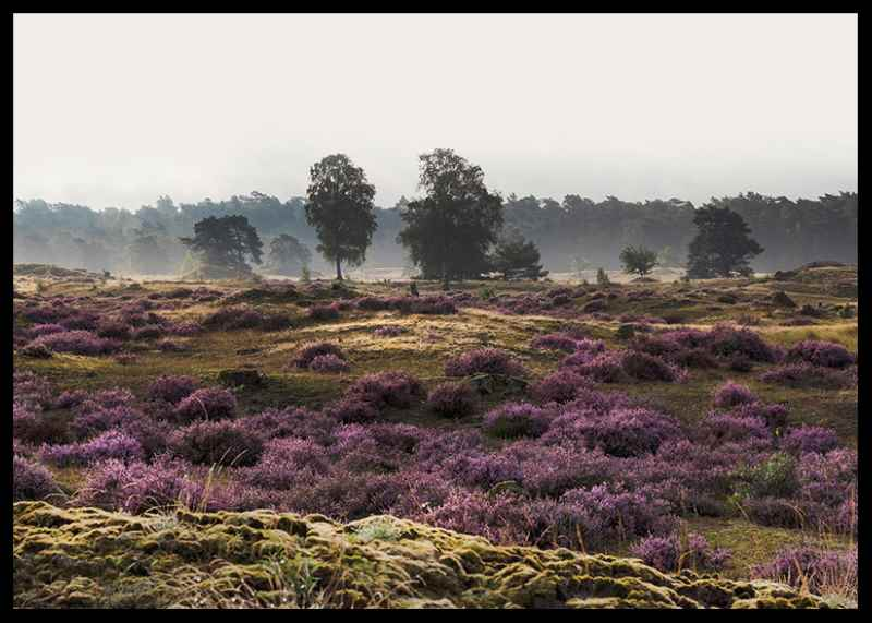 Veluwe Meadow-2