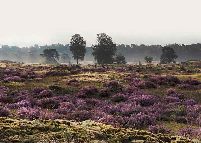Veluwe Meadow-3