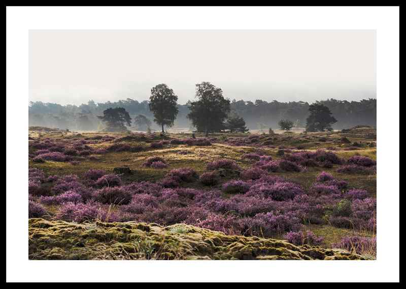 Veluwe Meadow-0