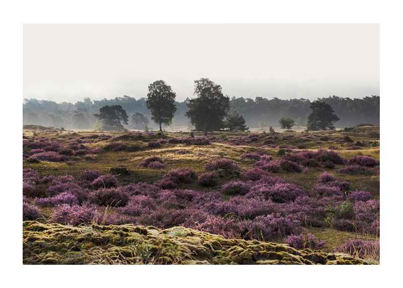 Veluwe Meadow-1