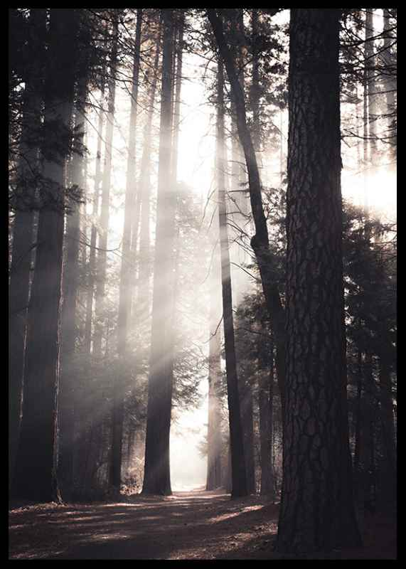 Beaming Forest-2