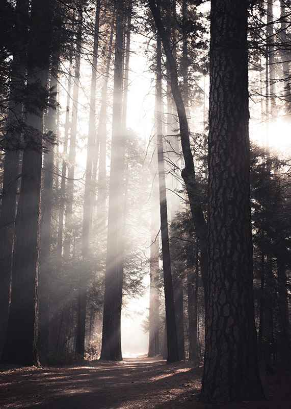 Beaming Forest-3