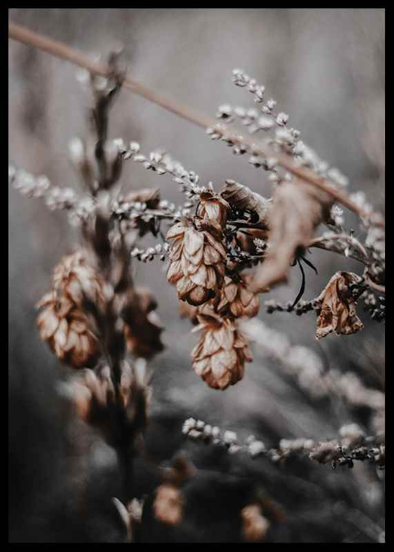 Autumn arrival-2