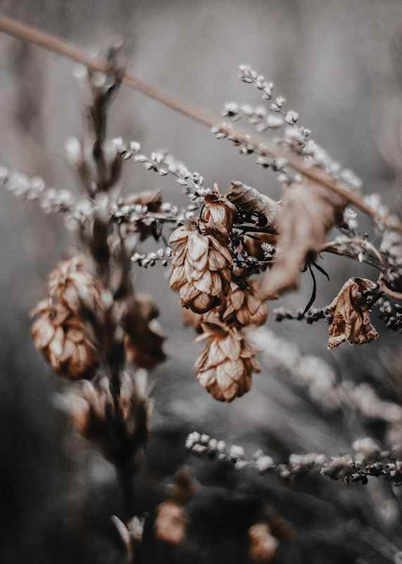 Autumn arrival-3