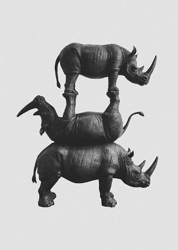 Three Rhinos-3