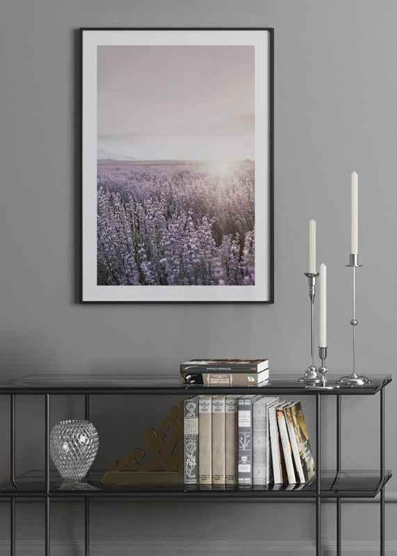 Lavender Meadow-4