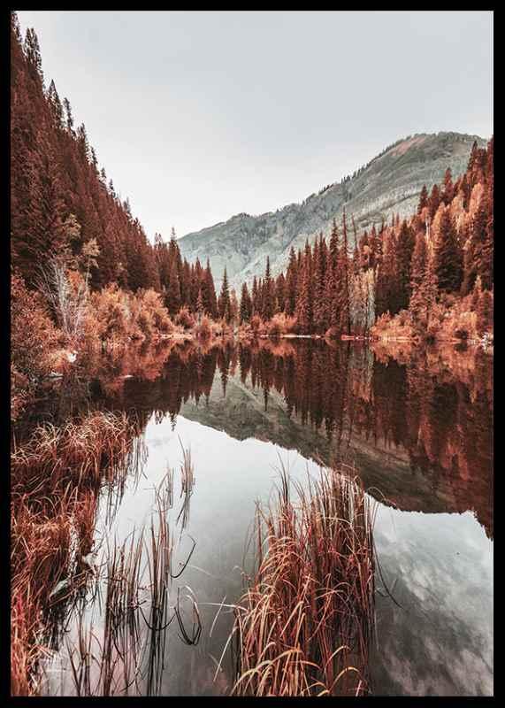 Colorado Forest-2