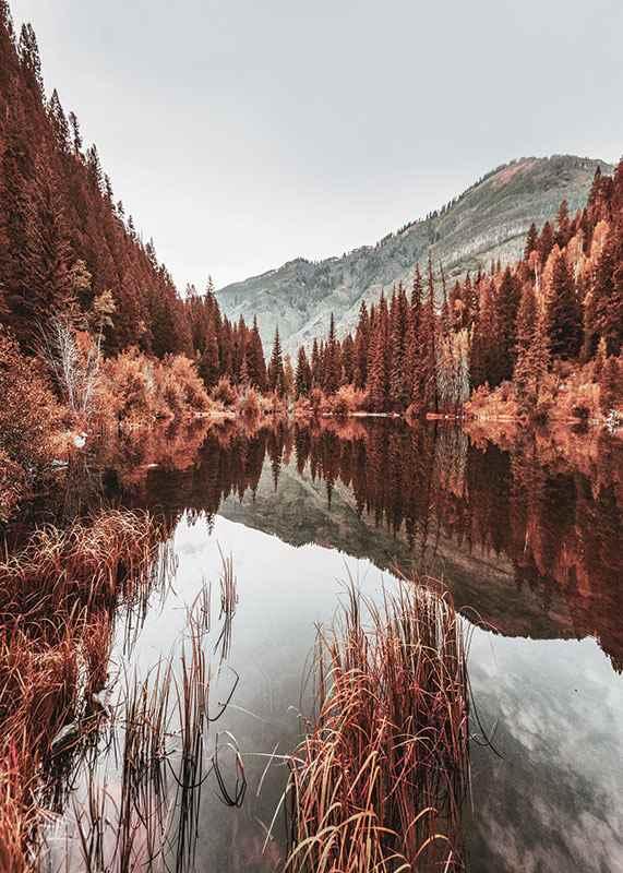 Colorado Forest-3