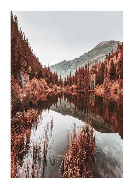 Colorado Forest-1