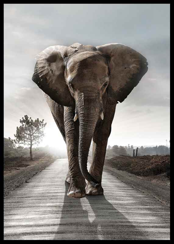 Elephant Road-2