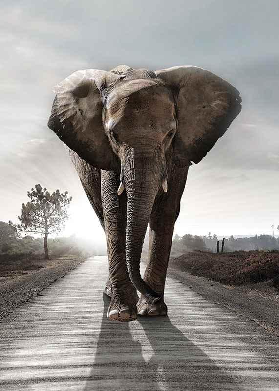 Elephant Road-3