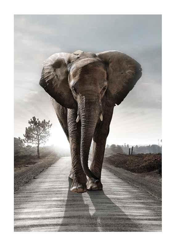 Elephant Road-1