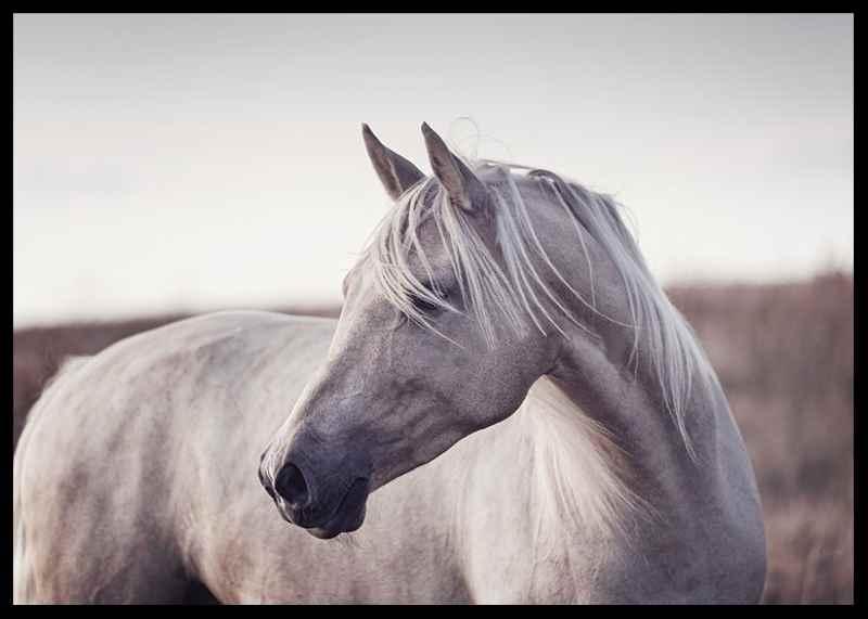 White Horse-2