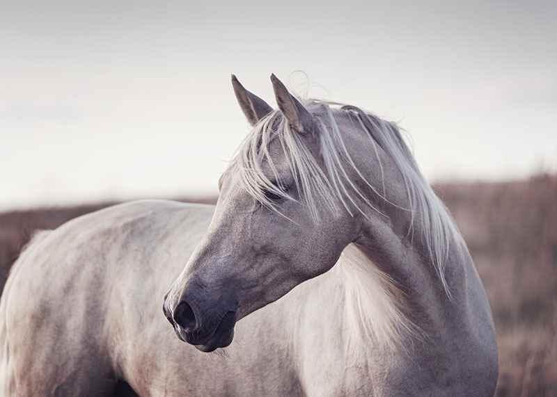 White Horse-3