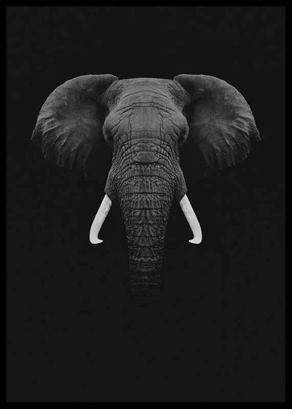 Black Elephant-2