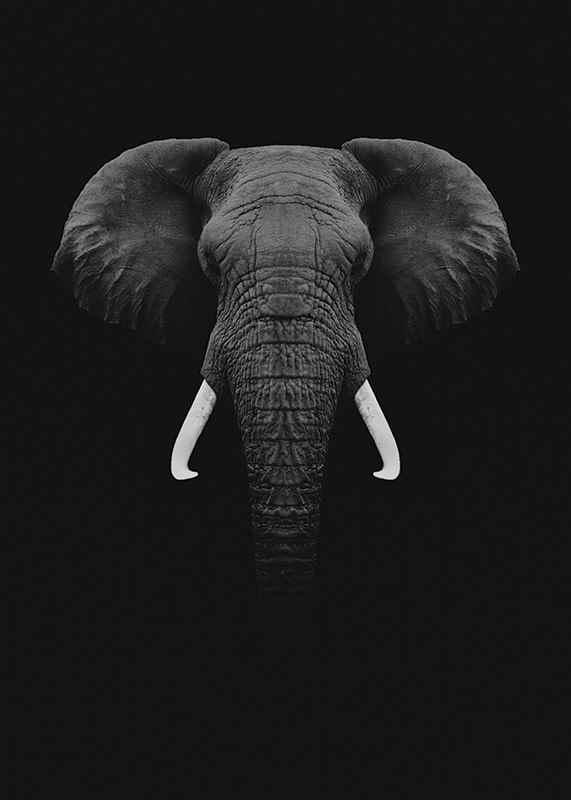 Black Elephant-3