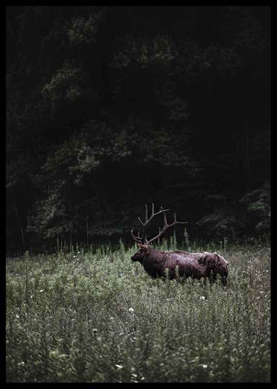 Deer in Nature-2