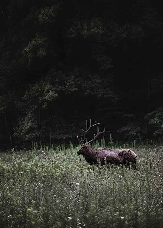 Deer in Nature-3