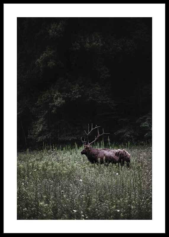 Deer in Nature