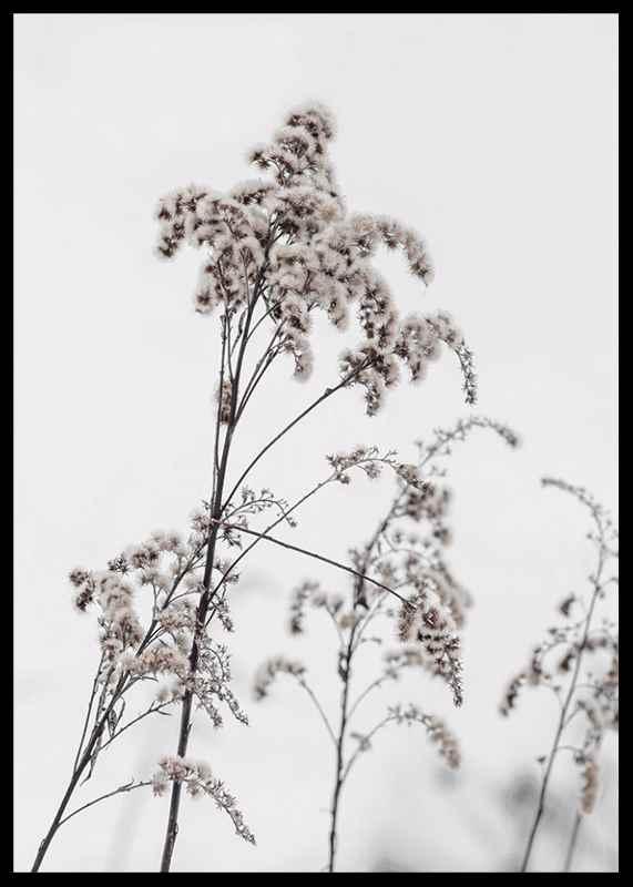 Dry Flowers-2