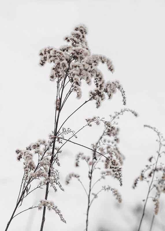 Dry Flowers-3