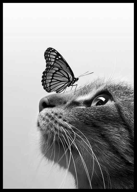 Butterfly Cat-2