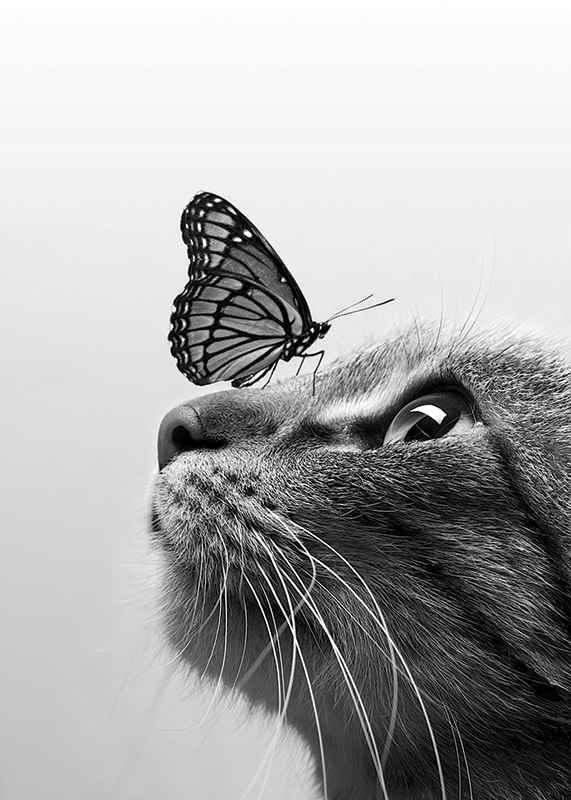 Butterfly Cat-3
