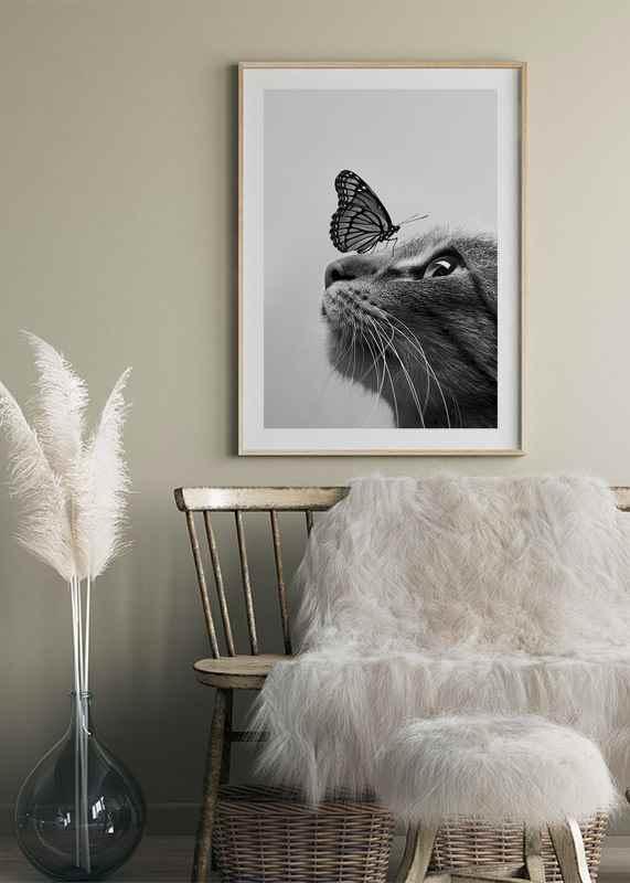 Butterfly Cat-4