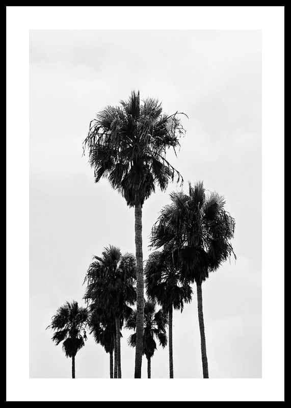 L.A Palm Trees
