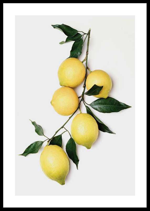 Lemons With Leaves-0