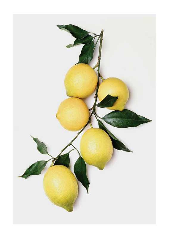 Lemons With Leaves-1