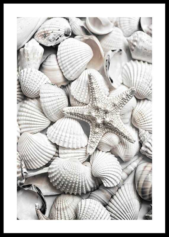 Seashells-0