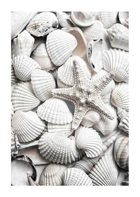 Seashells-1