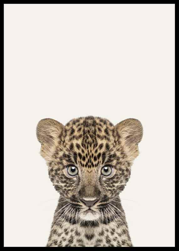 Baby Leopard-2