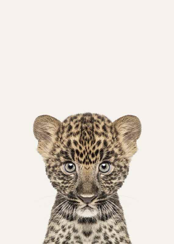 Baby Leopard-3