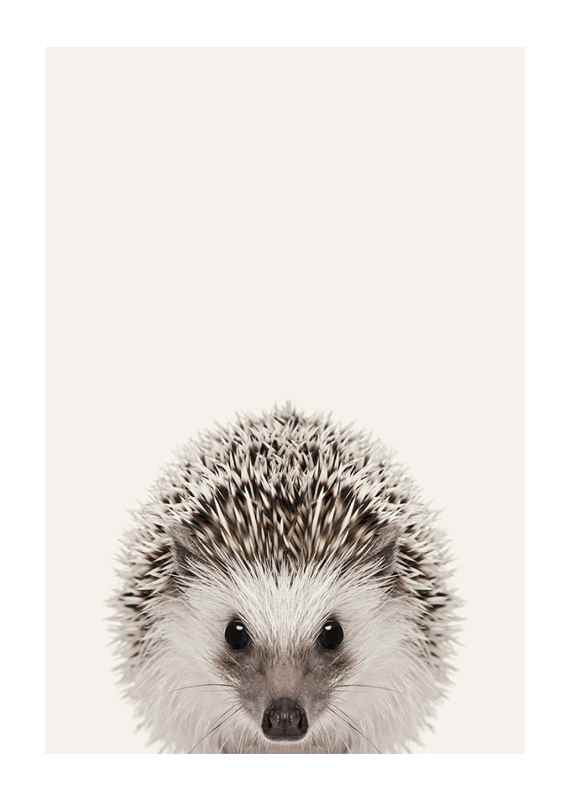 Baby Hedgehog-1