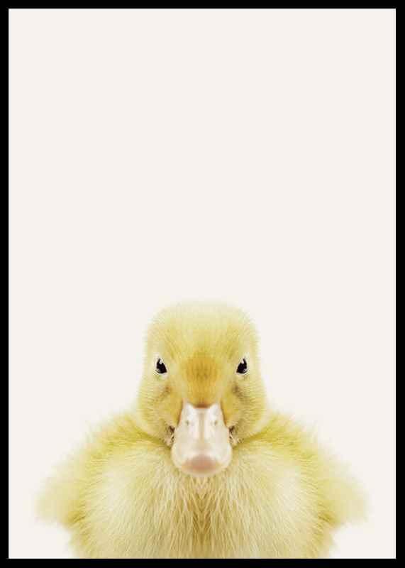 Baby Duck-2