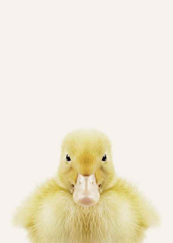 Baby Duck-3