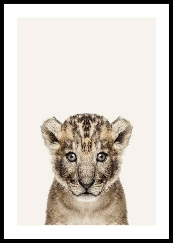 Baby Lion-0