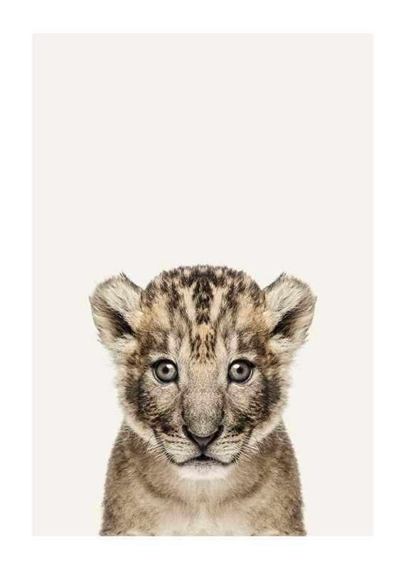 Baby Lion-1