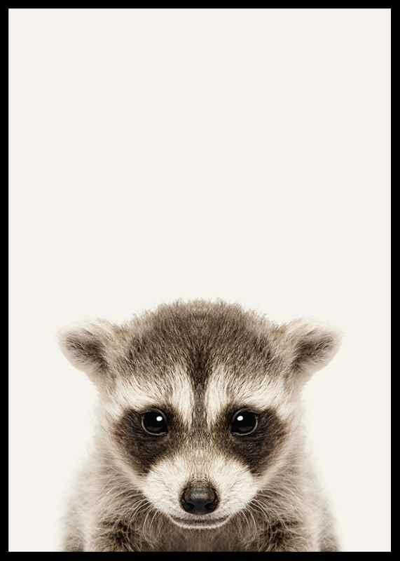 Baby Raccoon-2