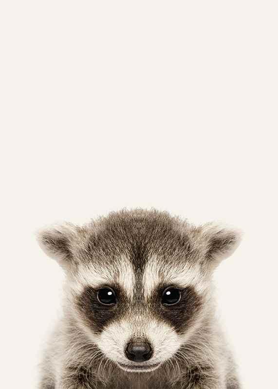 Baby Raccoon-3