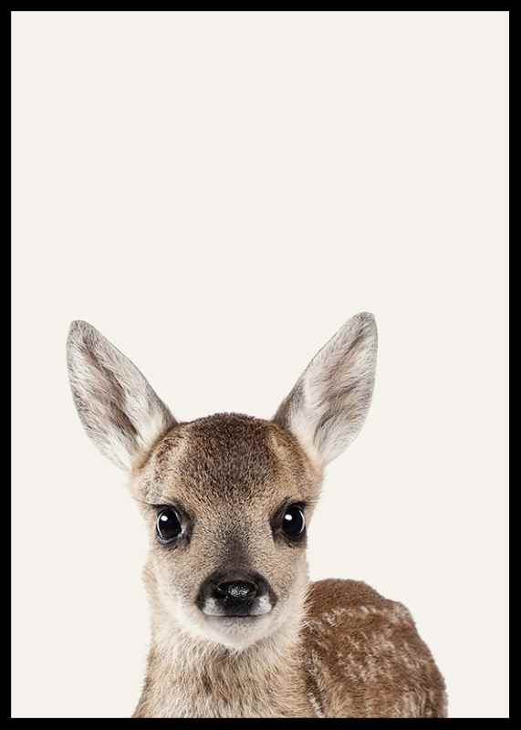 Baby Deer-2