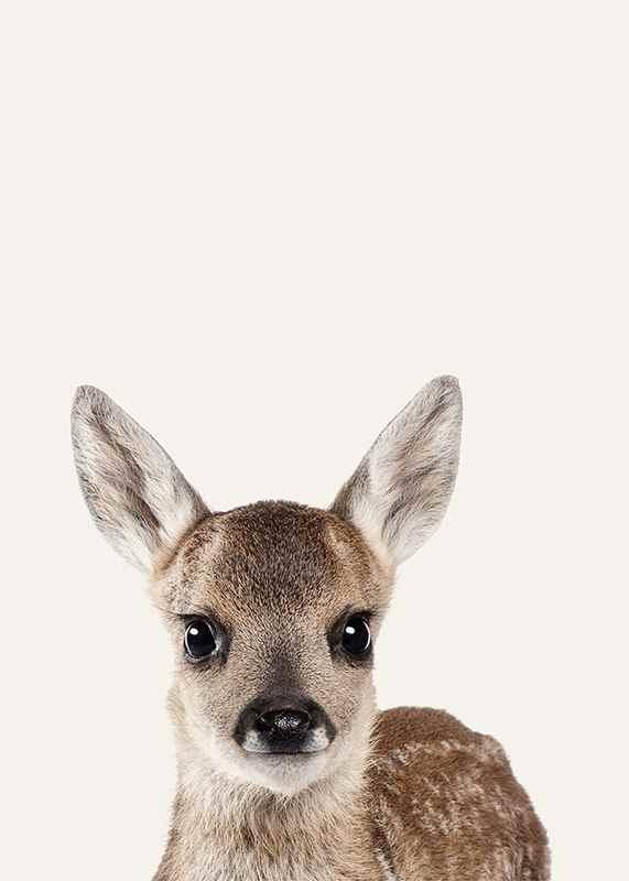 Baby Deer-3