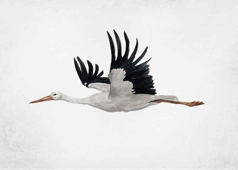Watercolor Stork-3
