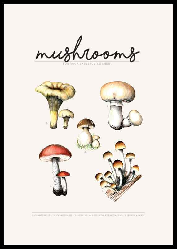 Mushrooms-2
