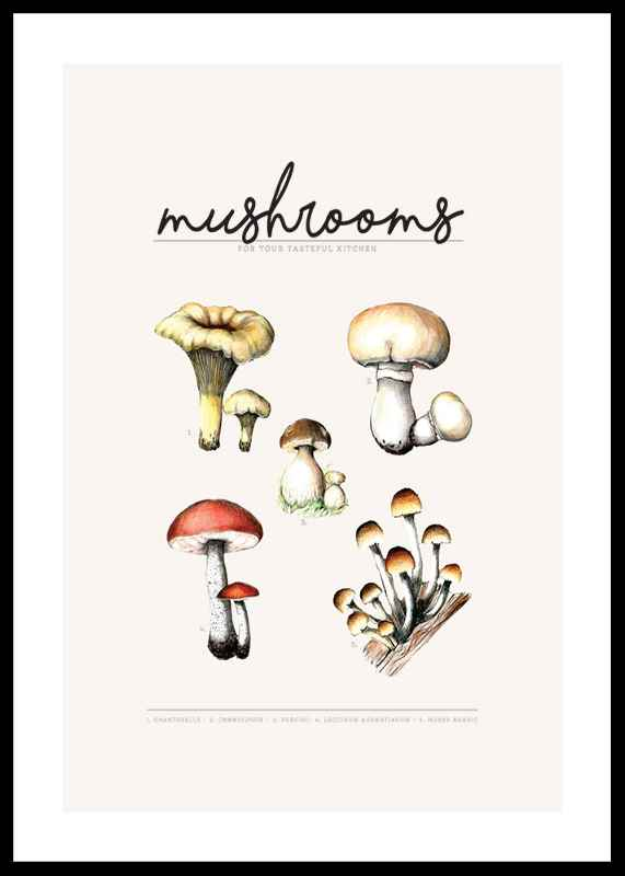 Mushrooms-0