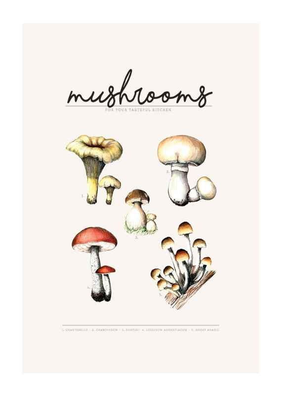 Mushrooms-1