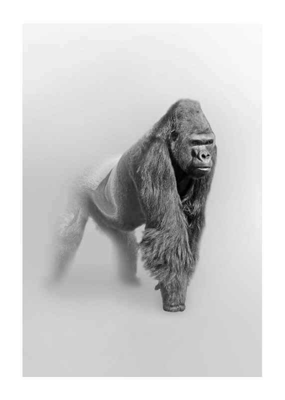 Faded Gorilla -1