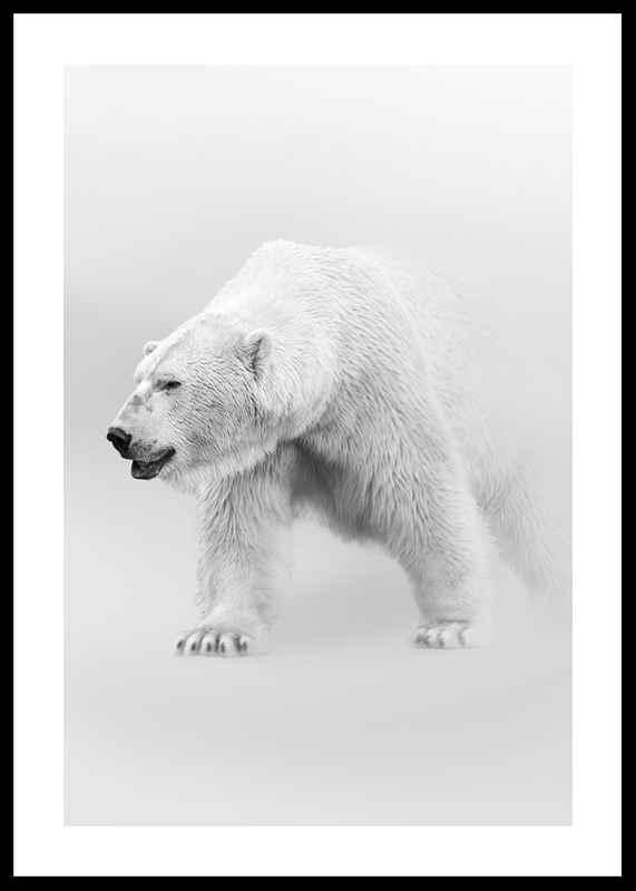 Faded Polar Bear-0
